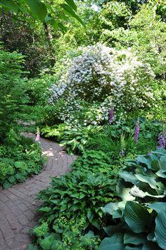 Shaded garden