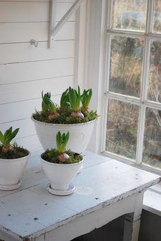 bulbs ~ freshness ~ green and white