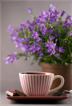 pretty flowers and a cup of coffee