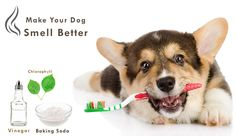 Is Your #Dog #Stinking? Follow These Natural Ways To #Deal With Bad #Odors -