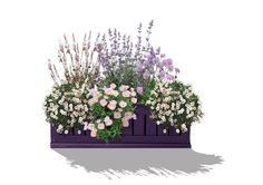 Ein kleiner Traum in Zartrosa, Weiß und Lila für jeden sonnigen Balkon. Von Mai bis Oktober zieren Prachtkerze, Katzenminze, Skabiose, rosa Nachtkerze und Feinstrahlaster ihren Freisitz mit überreicher Blütefülle. Die zarten...