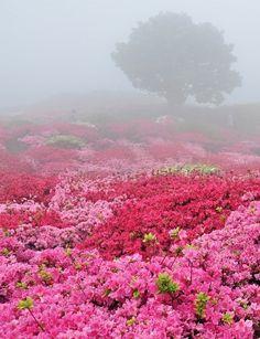 Beautiful blanket of flowers
