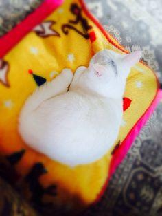 cat お餅
