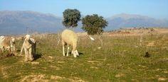 Landscape from El Hachimia, Bouira. Algeria.