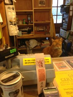 This was the cashier yesterday at the best book store in the northeast - The Book Barn in Niantic, CT.