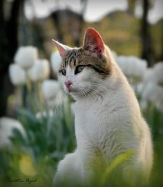 Spoiled Cat by Sadettin  Uysal on 500px