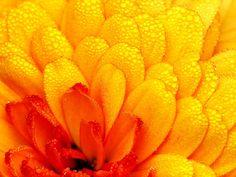 Adding Dew Drops to Enhance Macro Nature Photography Double Exposure Photography, Levitation Photography, Types Of Photography, Water Photography, Abstract Photography, Macro Photography, Wedding Photography, Flower Photography, Experimental Photography