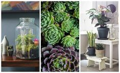 THE TOP 10 INDOOR GARDENING TIPS Small-space gardening expert Isabelle Palmer shares her guidelines for growing the best plants indoors