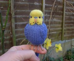 "Buderigar  Knitted life size Budgie "" Zaki "" needle felted  mothers day  gift"