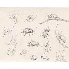 beetle model sheet - Steve Horrocks #beetles #insect #drawing #illustration #stevehorrocks