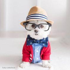 Conheça Toby LittleDude: o cachorro hipster