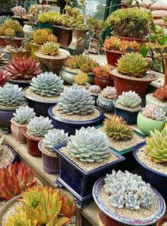 Succulents of all shapes and sizes!