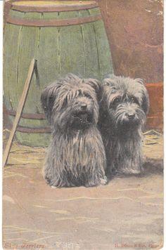 Vintage Postcard / Skye Terrier Dogs / H Dixon Sons Photo Dog Card Terriers Skye Terrier, Terrier Dogs, Terriers, Cute Puppies, Cute Dogs, Dogs And Puppies, Dog Photos, Dog Pictures, Dog Cards