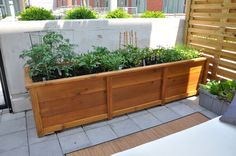 Gardening Container Step-by-step instructions for building this beautiful container garden. - HGTV Watch TV Online - your source for HGTV Canada shows, Sarah House Hunters, TV schedule and more. Get DIY home design tips and decorating ideas. Garden Boxes, Garden Planters, Herb Garden, Big Planters, Cedar Planters, Vegetable Garden, Outdoor Projects, Garden Projects, Plantation