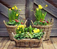 Lawn And Garden, Garden Tools, Party Garden, Hydrangea Flower, Flower Pots, Garden Bulbs, Easter Flowers, Spring Home Decor, Deco Table