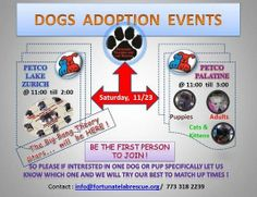 We save and rescue dogs and puppies from unfortunate kill situations. We foster all of our dogs before they are adopted to approved families or individuals. Labrador Retriever Rescue, Rescue Dogs, Dogs And Puppies, Kittens, Adoption, Cute Kittens, Foster Care Adoption, Kitty Cats, Baby Cats