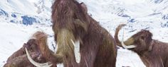 Harvard scientists say they could be just 2 years away from resurrecting woolly mammoth genes - ScienceAlert
