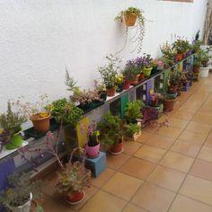 Que contentes estan les plantes del pati!