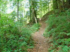 harta romaniei in fotografii: Drumetie: Busteni - Valea Jepii Mari - Cabana Piat...