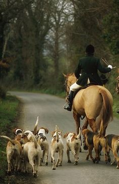 My dream life: horses and dogs. I could leave the English country manor lifestyle but a few riches wouldn't hurt! Zebras, English Country Manor, English Countryside, American Foxhound, Fox Hunting, The Fox And The Hound, Equestrian Style, Horse Riding, Beautiful Horses