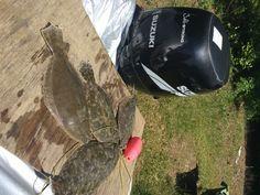 Strong Angler Challenge - [U.S. Open] - Flounder Fishing #flounder