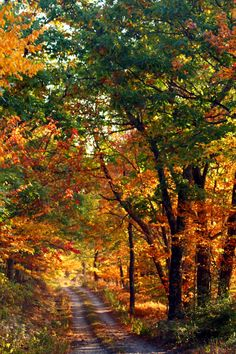 Fall country road--perfect to take a walk, look for wildlife and take a few pictures. Beautiful Places, Beautiful Pictures, Beautiful Scenery, Autumn Scenes, Fall Pictures, Nature Pictures, All Nature, West Virginia, Belle Photo