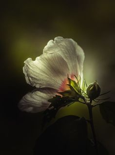 tinnacriss:I Can See Right Through You by Paul Barson on 500px