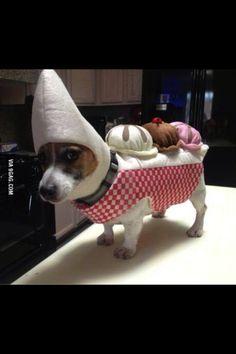 Hot Doggie!