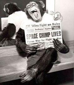 Image result for mercury chimpanzees