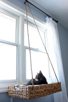10 Tips for Living With Pets + Kids in a Small Space - 10 Tips for Living With Pets + Kids in a Small Space Tricks for housing a big life in a small home. Cat Apartment, Apartment Layout, Apartment Interior, Apartment Living, Living Room, Living With Cats, Space Cat, Space Kids, Pet Furniture