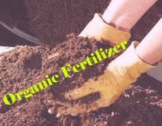 DIY- organic fertilizer is the ultimate solution. http://gsplantfoods7.blogspot.in/2013/06/organic-fertilizer-is-only-solution-for.html