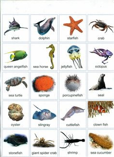 Different kinds of fish in english – A Selection of Pins about Animals Animals Name In English, Types Of Species, Goldfish Types, Fish Chart, Oscar Fish, Homer Alaska, Animal Worksheets, Fish Stock, Pet Fish