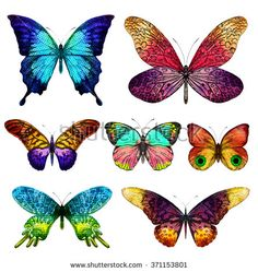 Colorful vector butterflies. Isolated, EPS10.