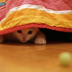Dare la pillola al gatto può non essere semplice...