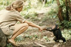 Tansania, 1964: Dieses Bild der berühmten Affenforscherin Jane Goodall und eines neugeborenen Schimpansen ging um die Welt. Goodall wurde lange Zeit von der National Geographic Society gefördert. Bild: Hugo van Lawick/«National Geographic»