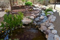 Ecosystem waterfall, stream & Koi pond, complete with sitting area covered with shade sail. Blends beautifully with desert surroundings. Backyard Farming, Ponds Backyard, Small Water Gardens, Pond Construction, Pond Maintenance, Outdoor Ponds, Pond Waterfall, Pond Water Features, Pond Landscaping