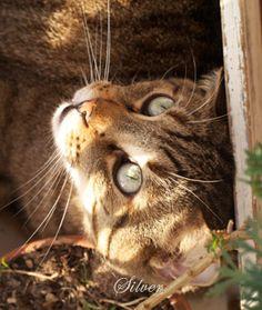 La gatta sul tetto: Shabby chic on friday: dettagli poetici