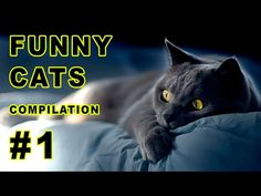 Funny cats, cat fails Compilation 2017 -  #animals #animal #pet #cat #cats #cute #pets #animales #tagsforlikes #catlover #funnycats Cats are simply the funniest and most hilarious pets, they make us laugh all the time!  Hope you like our compilation – Funny Cat & Fails Compilation 2017 LIKE, COMMENT & SHARE!!! for more... - #Cats