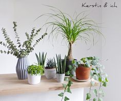 Urban Jungle Bloggers 1 plant 3 stylings 1
