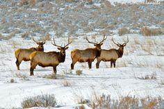 The Boys.  Summit County, Utah.