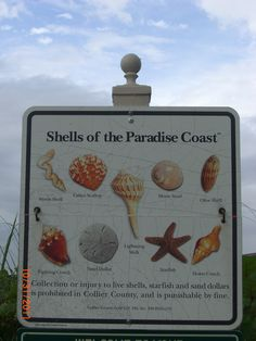 Shells of the Paradise Coast - #Naples Florida Is collecting seashells by the seashore in your future? Call #NaplesRealEstate to help you find your dream home 239-370-0574