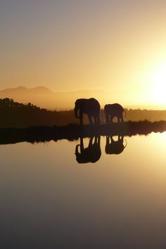 Addo Elephant National Park in South Africa - the name seems quite fitting!