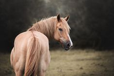 Pferdefotografie - Du möchtest ein Fotoshooting mit deinem Pferd? Alle Infos zum Pferdeshooting findest du auf meiner Homepage www.michaela-steiner.at Michaela, Salzburg, Portrait, Horses, Photography, Animals, Photoshoot, Photograph, Animales