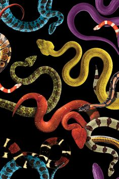 Source Damien Nicolas Roux : patterns & snakes.