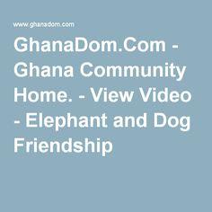 GhanaDom.Com - Ghana Community Home. - View Video - Elephant and Dog Friendship