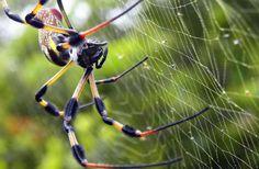 World of Macro Photo Challenge Online Art Gallery, Animals Beautiful, My Photos, Challenges, World, Spiders, Banana, Bugs, Silk