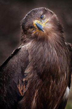 Un aigle vous introspectre !