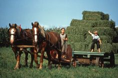 Belgian Team,  Amish Children, and some really nice hay !