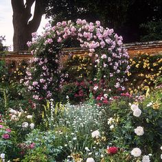 Mottisfont Abbey Rose Gardens, Hampshire, UK | The best romantic rose garden in the world (20 of 20) | Romantic rose pergola covered with pink climber in full bloom
