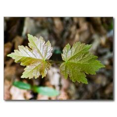 Forest Leaves Post Cards. Click to buy from my Zazzle store.